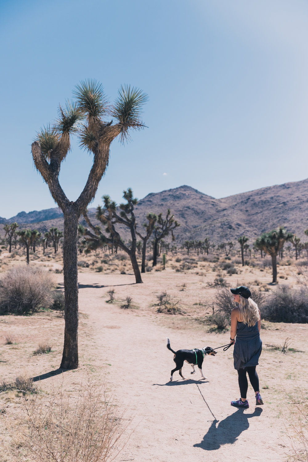 Joshua Tree Edits (21 of 156).jpg