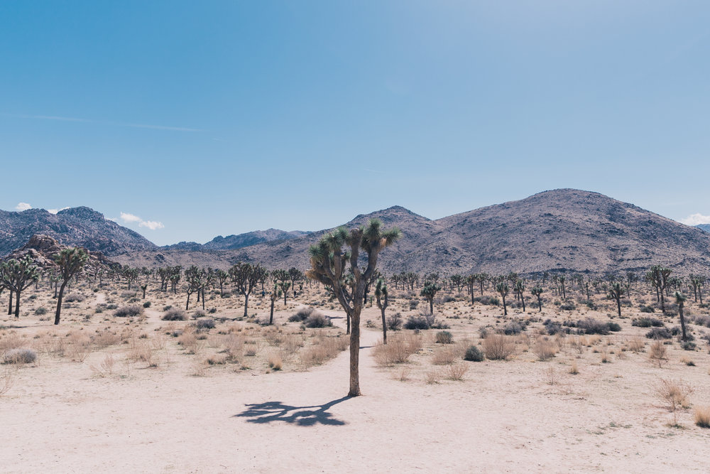 Joshua Tree Edits (15 of 156).jpg