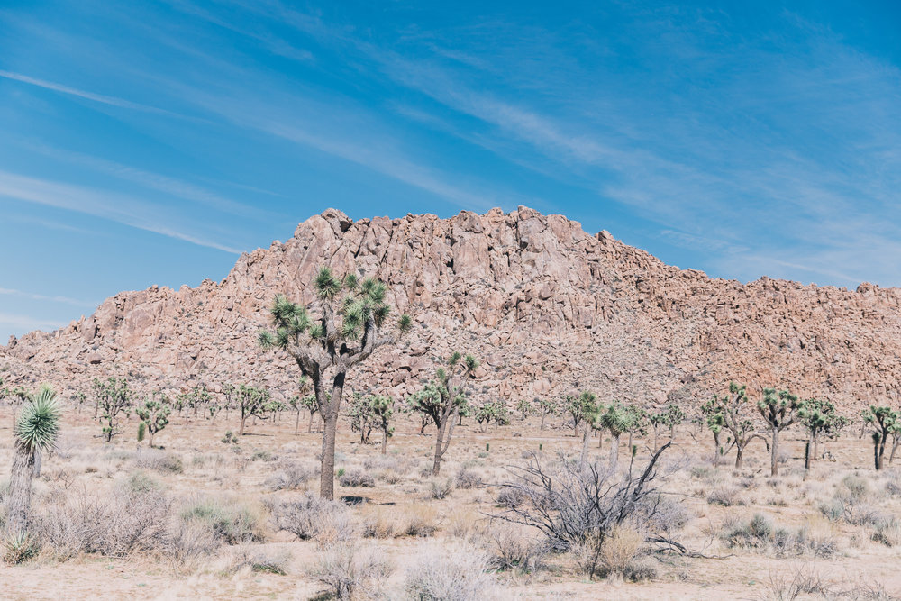 Joshua Tree Edits (25 of 156).jpg