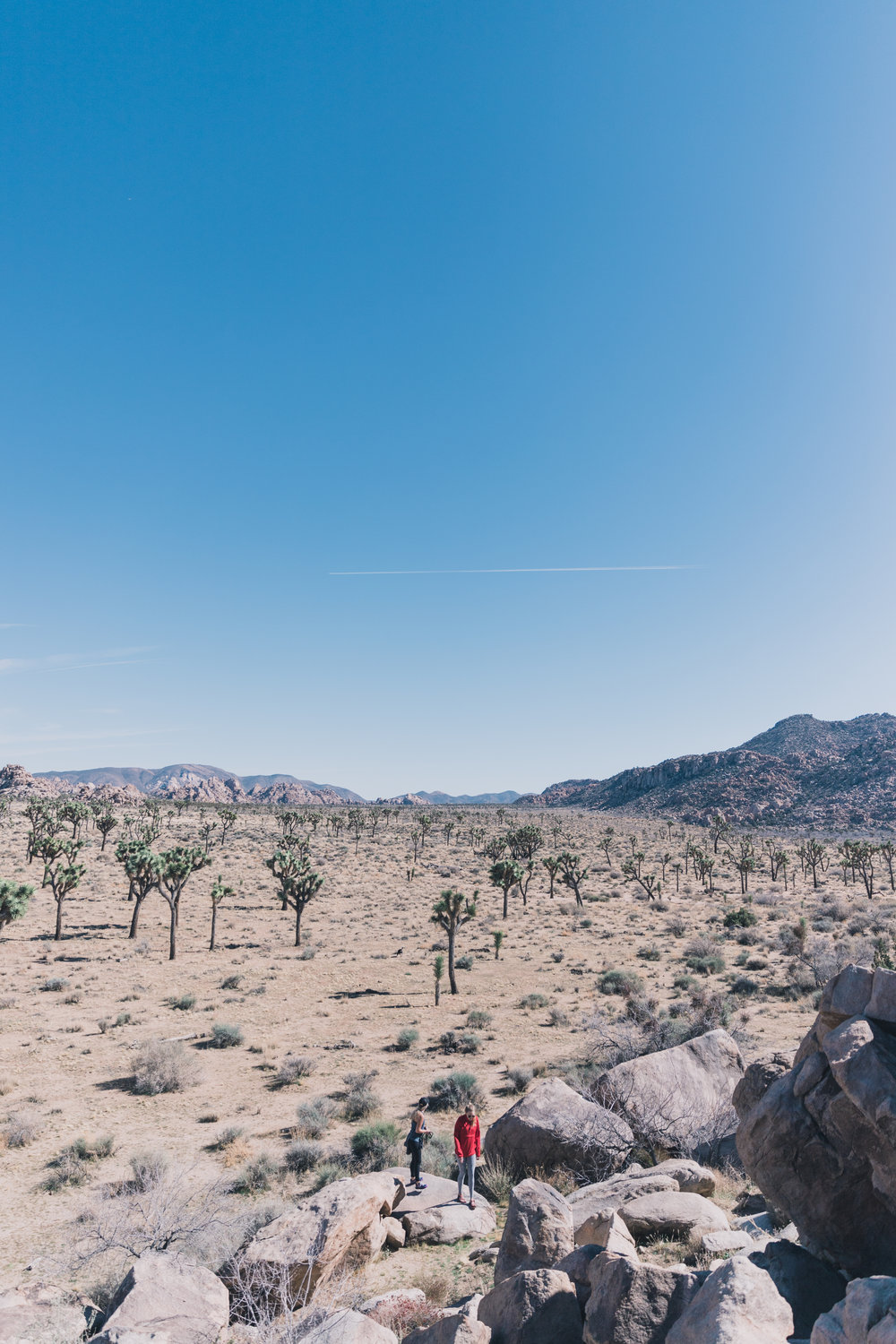 Joshua Tree Edits (30 of 156).jpg