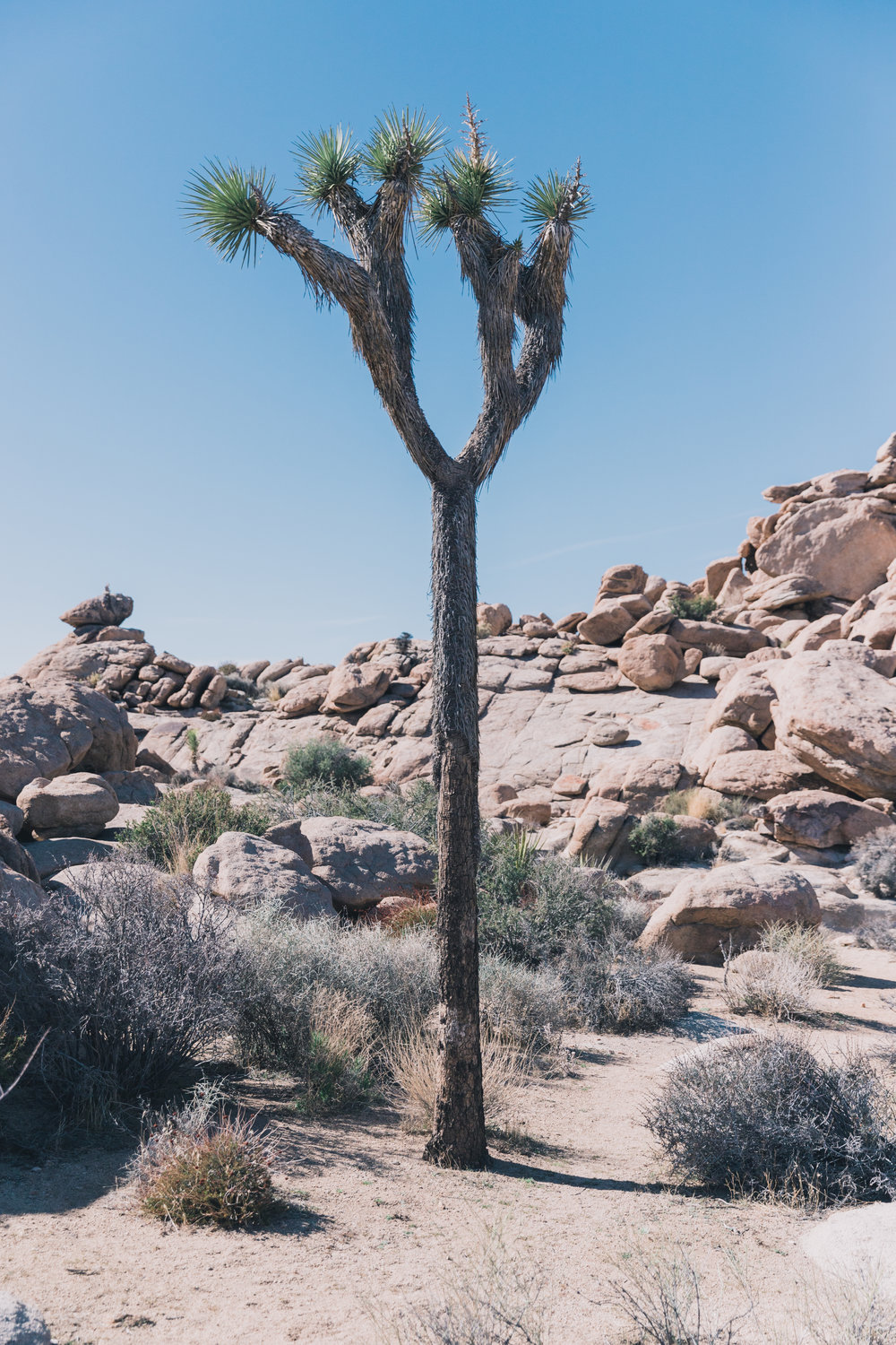 Joshua Tree Edits (50 of 156).jpg