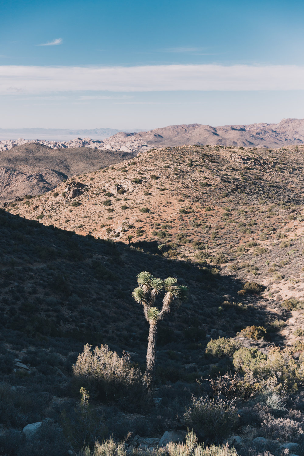 Joshua Tree Edits (103 of 156).jpg