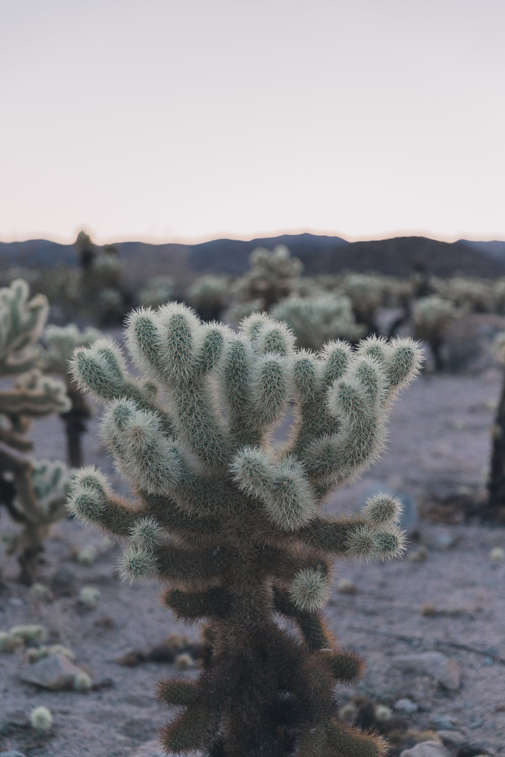 Joshua Tree Edits (134 of 156).jpg