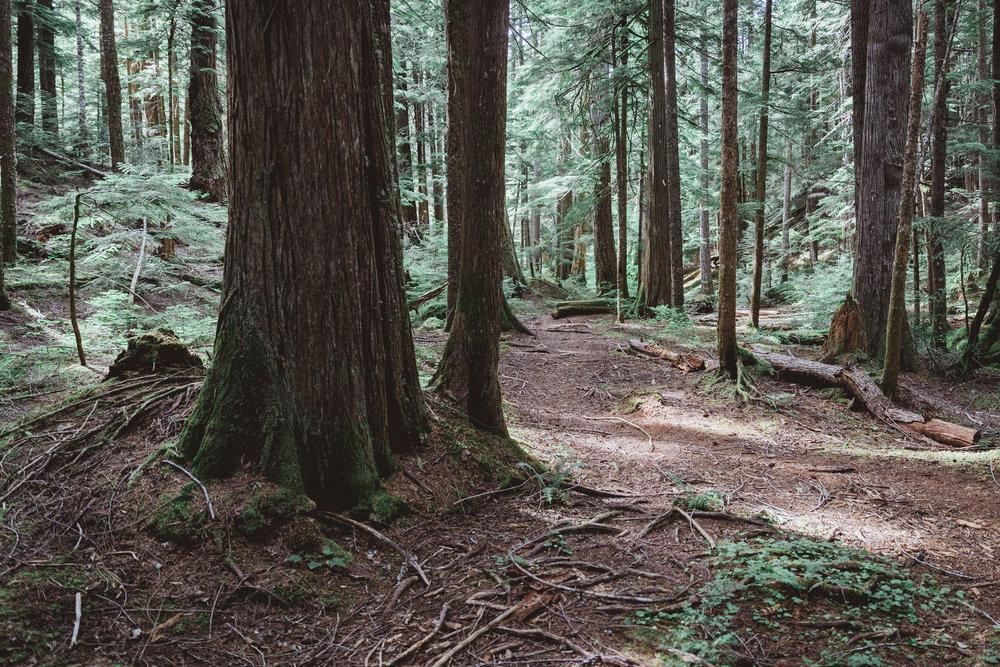 North Cascades Edits-9.jpg