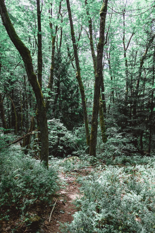 North Cascades Edits-104.jpg