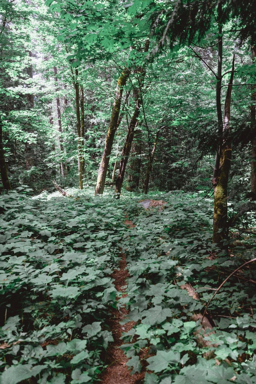 North Cascades Edits-105.jpg