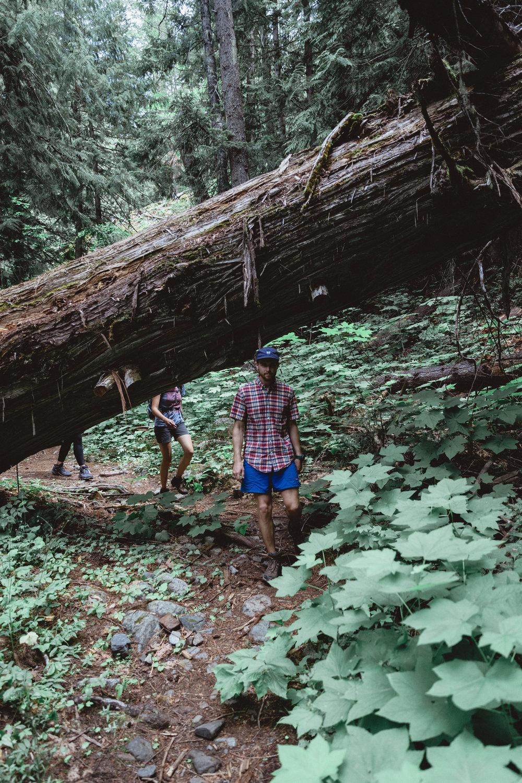 North Cascades Edits-112.jpg