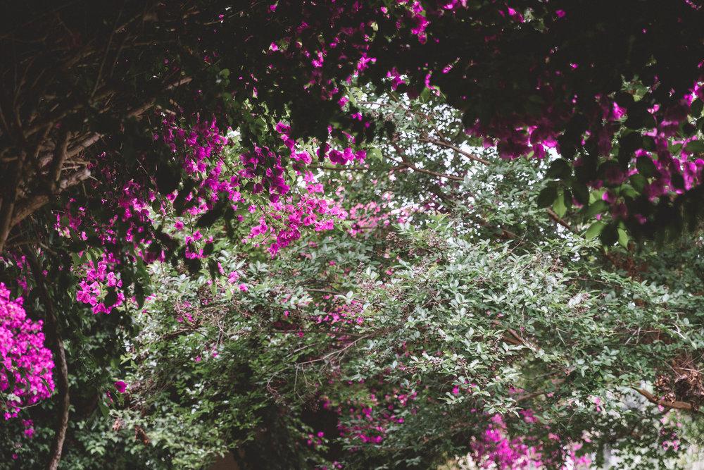 SummerScenes18 Edits-21.jpg