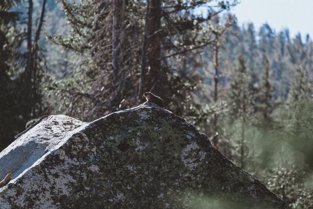 Yosemite16 Edits-114.jpg