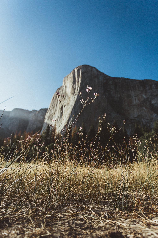 Yosemite16 Edits-183.jpg