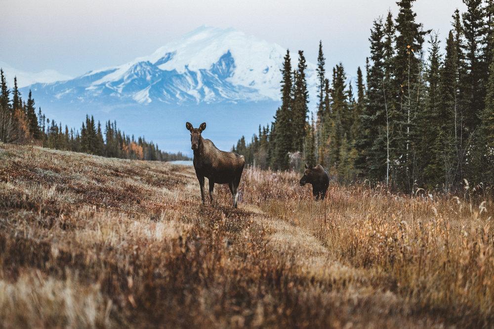 Alaska Edits-183.jpg