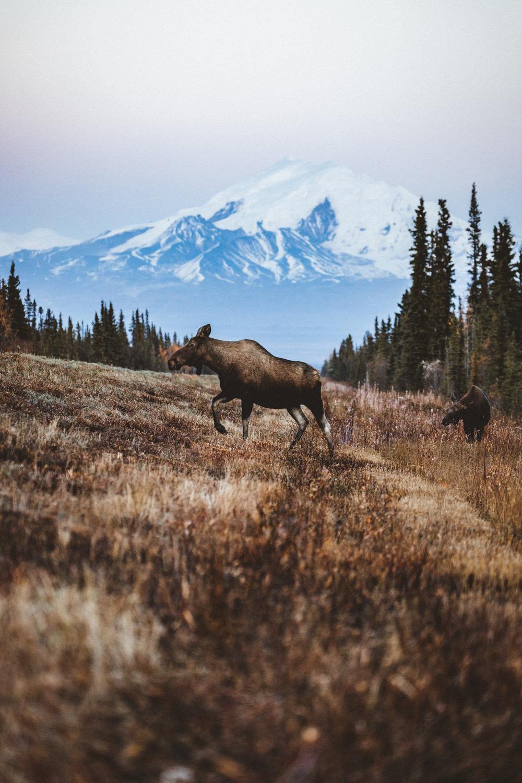 Alaska Edits-187.jpg