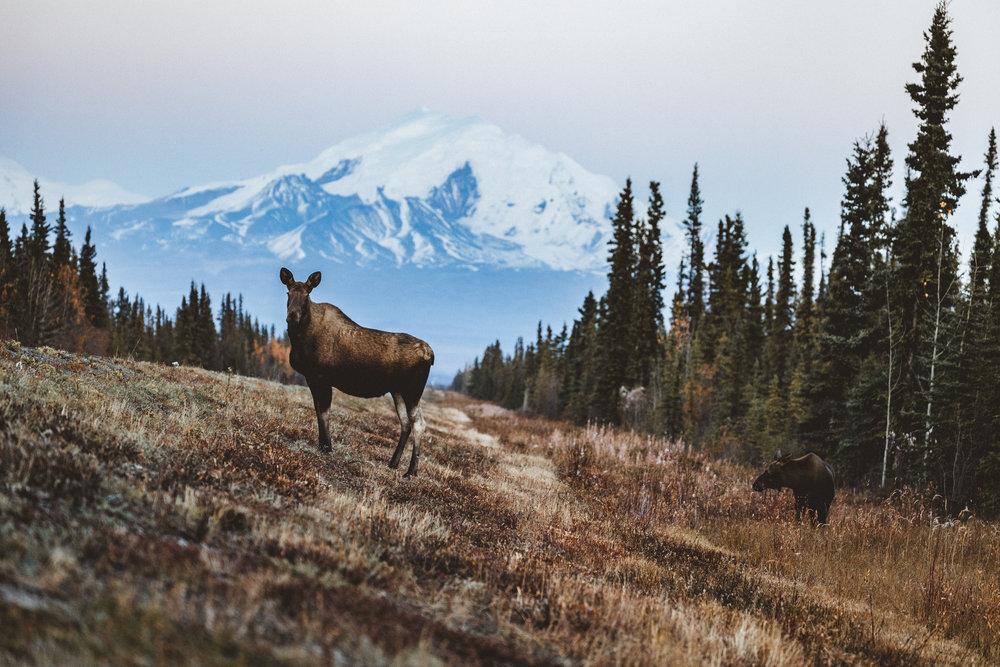 Alaska Edits-189.jpg