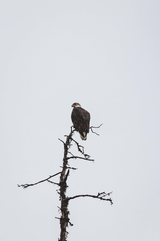 Alaska Edits-260.jpg