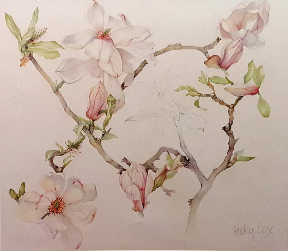 """Magnolia"" by Vicky Cox"