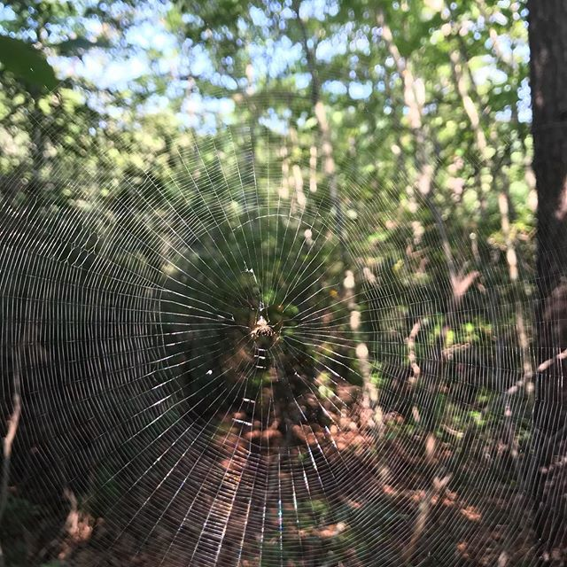 If you need me, I'm #walkinginthespiderwebs . . . . #spiderweb #virginiaisbeautiful #forestbathing #foresttherapy