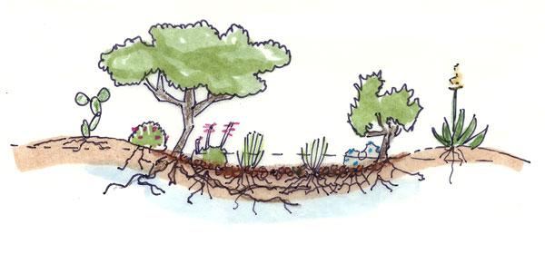 Tucson-Landscape-Design.jpg