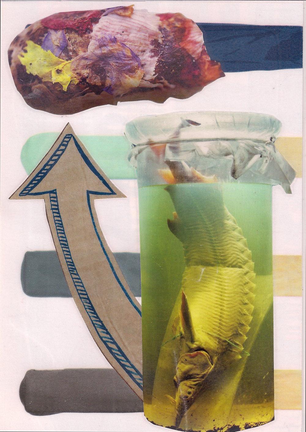 CocoonFish (1).jpeg