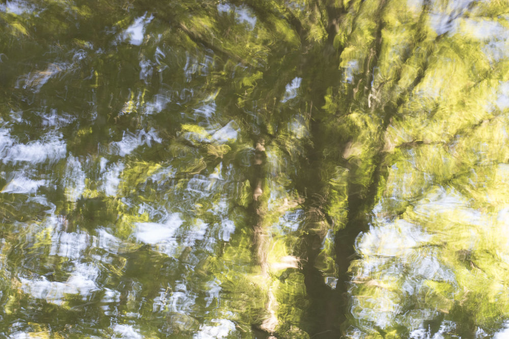 Bushy Park Reflections 2