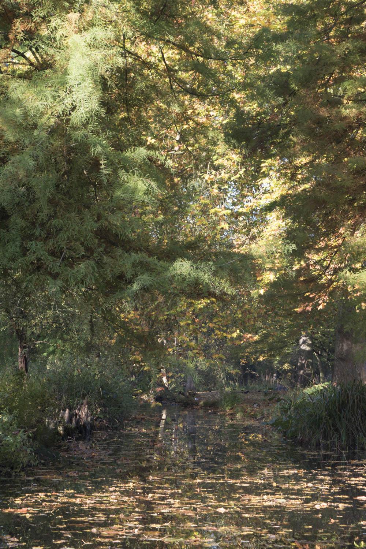 woodland_gardens_2_1500.jpg