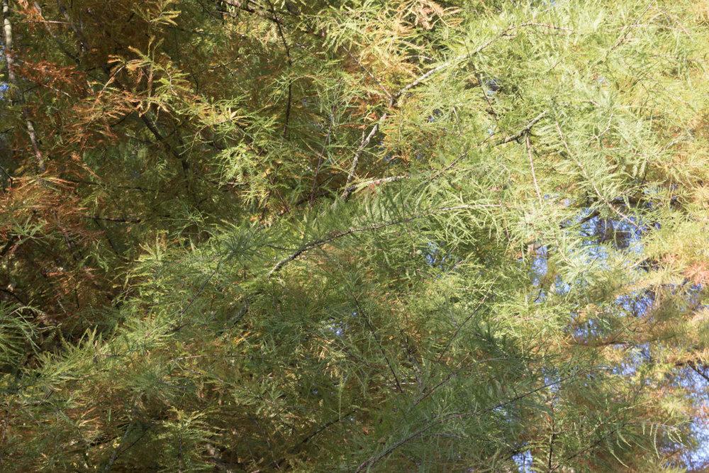 woodland_gardens_3_1500.jpg