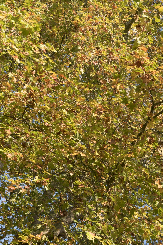 woodland_gardens_4_1500.jpg