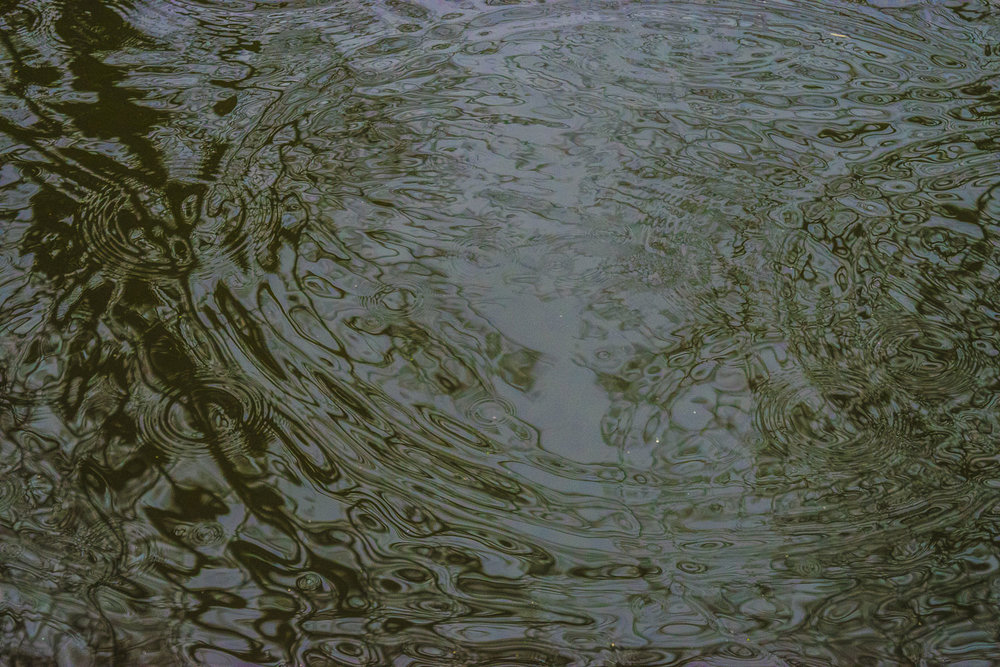bushy_raindrops_01_1500.jpg