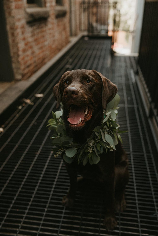 Wedding Dog North Bloom.jpg