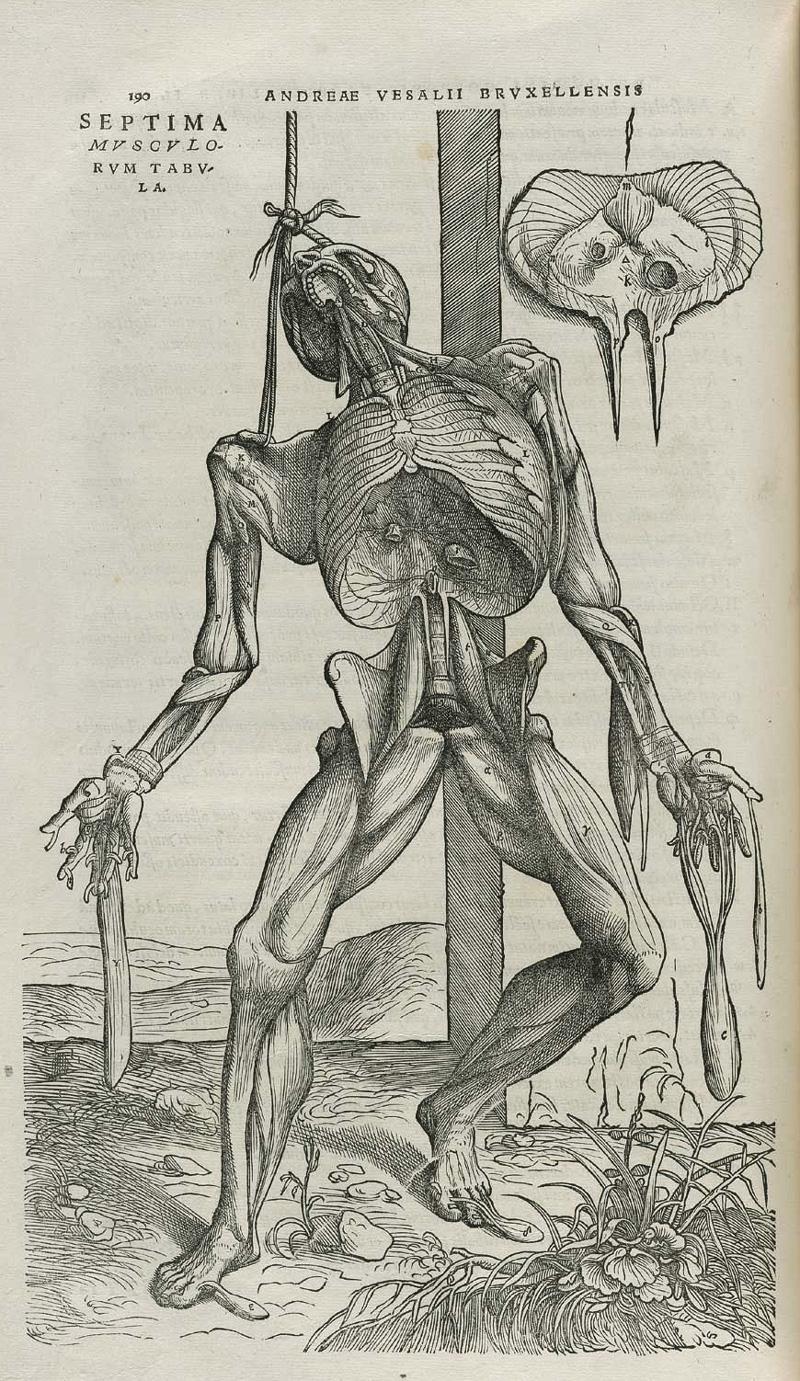 Andreas Vesalius, De Humani Corporis Fabrica, 1543