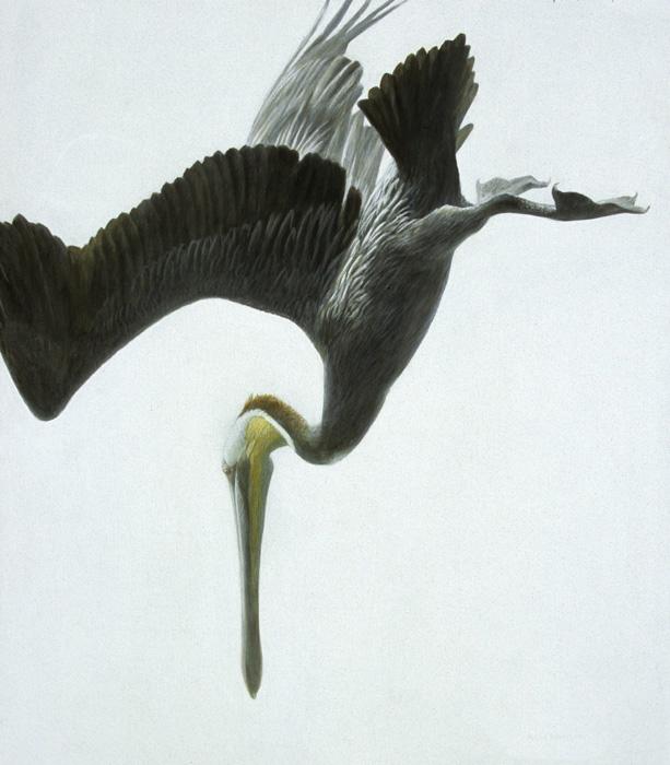 Pelicano 4
