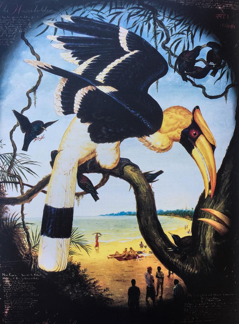 Hornbill indiano 1