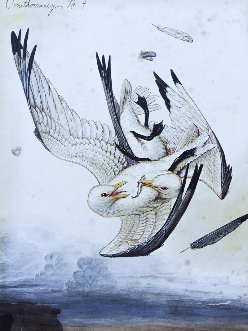 Aves em briga 1