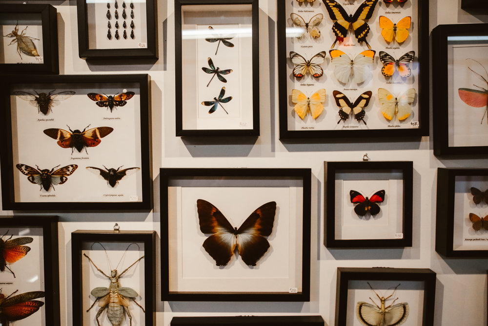 Butterfly Mounting — ☠
