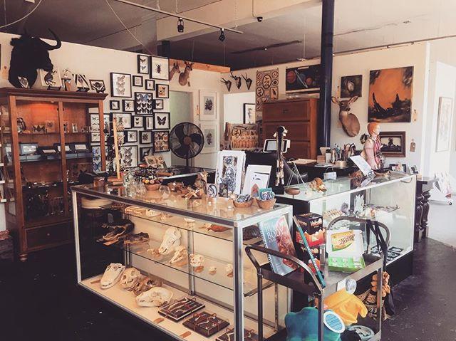 Brighten up your Friday with us! 💀💀💀 #itwasdeadwhenwemet ______ ______ . . #itwasdeadwhenwemet  #yvrshop #homeinspo  #skulls  #taxidermy  #taxidermist  #curioshop  #curio  #oddities  #vancouver  #eastvan  #hastingssunrise  #hastingsyvr  #iphoneonly  #viawesome  #mountpleasantyvr  #vultureculture  #curiosities  #shopsmall  #yvr  #explorevancouver  #homeinspo  #homedecor  #strangedecor
