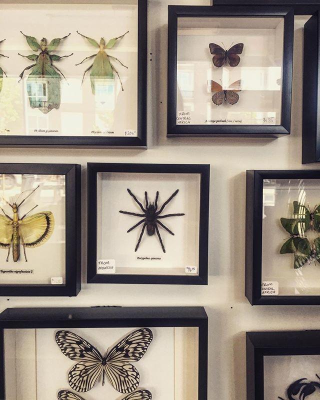 Explore the weird and wonderful 🕷🦋 #neverbenormal ••••••••• . . . . #itwasdeadwhenwemet  #yvrshop #homeinspo  #skulls  #taxidermy  #taxidermist  #curioshop  #curio  #oddities #vancouver  #eastvan  #hastingssunrise  #hastingsyvr  #iphoneonly  #viawesome  #mountpleasantyvr  #vultureculture  #curiosities  #shopsmall  #yvr  #explorevancouver  #homeinspo  #homedecor  #strangedecor