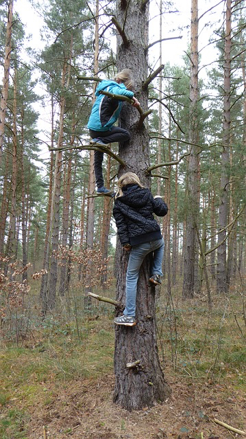 Children climbing tree - grat 640.jpg