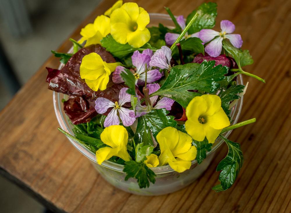 The Herb salad