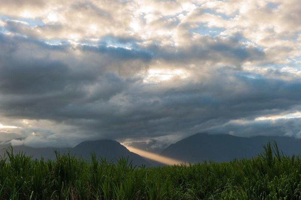 MartinaPatella_MauiSugarCane.jpg