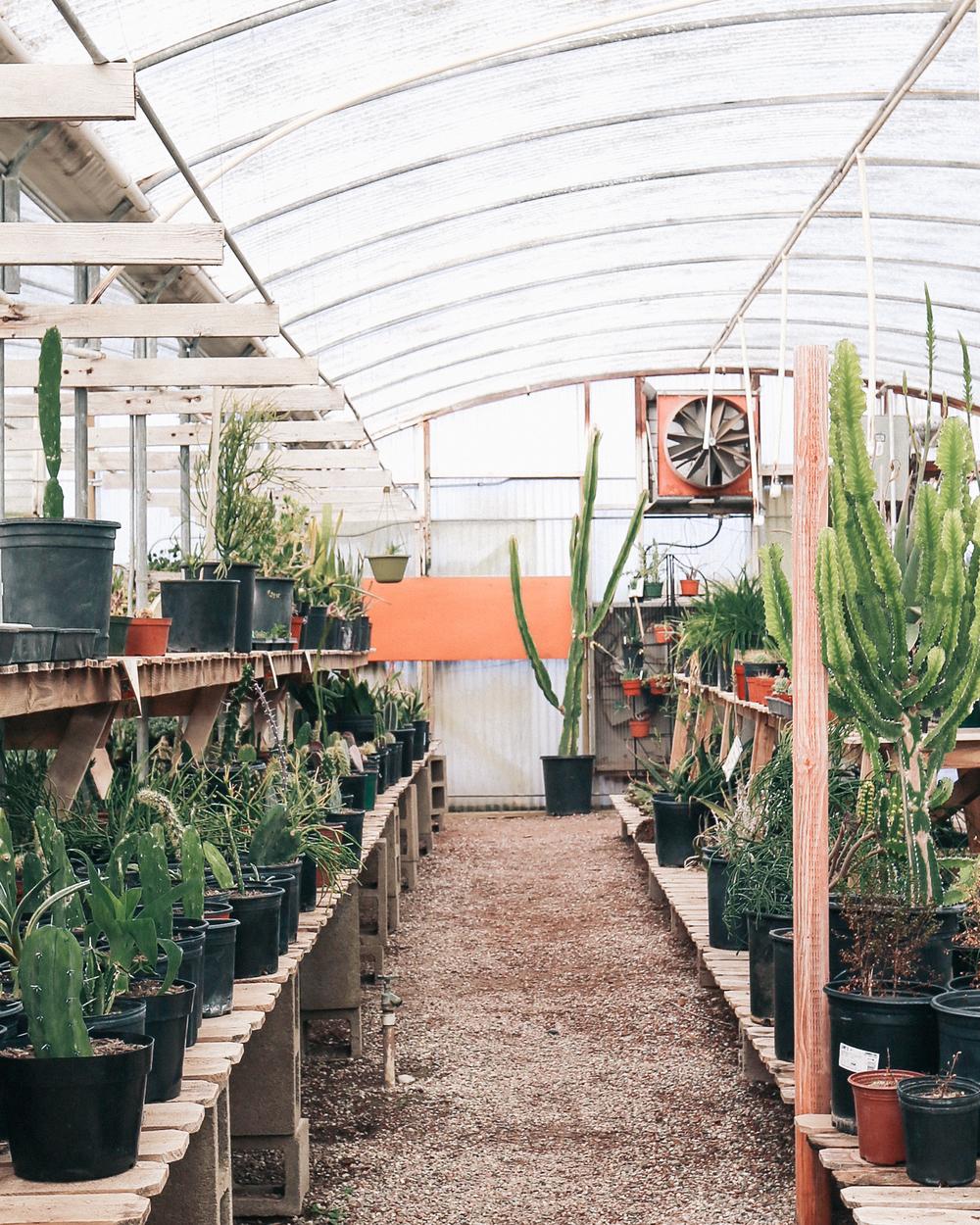 Cactus Mart in Morongo Valley, CA