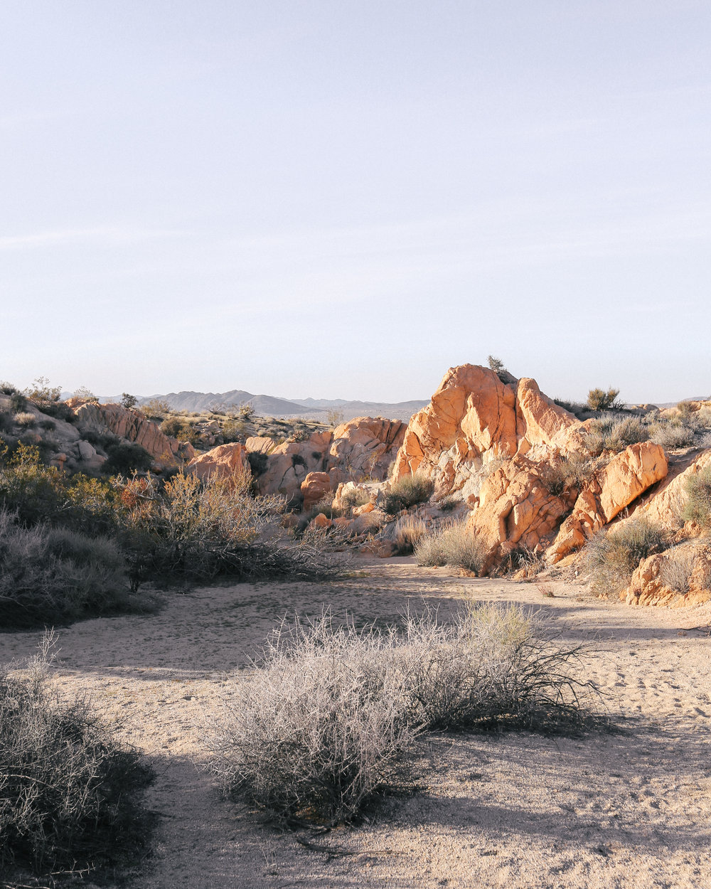 The Cosmic American Family's favorite trails in Joshua Tree, CA