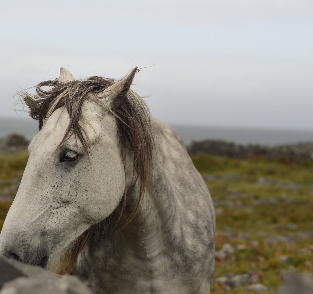 When not carving wood, - Celina enjoys traveling the world to photograph horses-despite the detest of her absence felt by Moose. When not carving rawhide, Moose is busy chasing squirrels or listening to Motown.