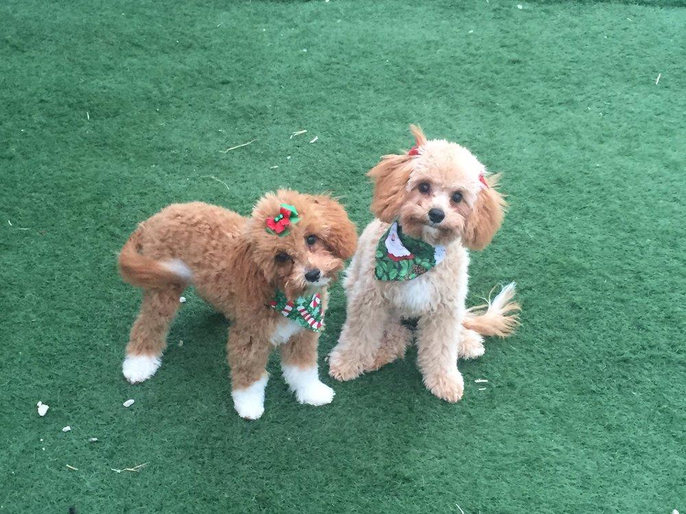 Sadie & Sophie