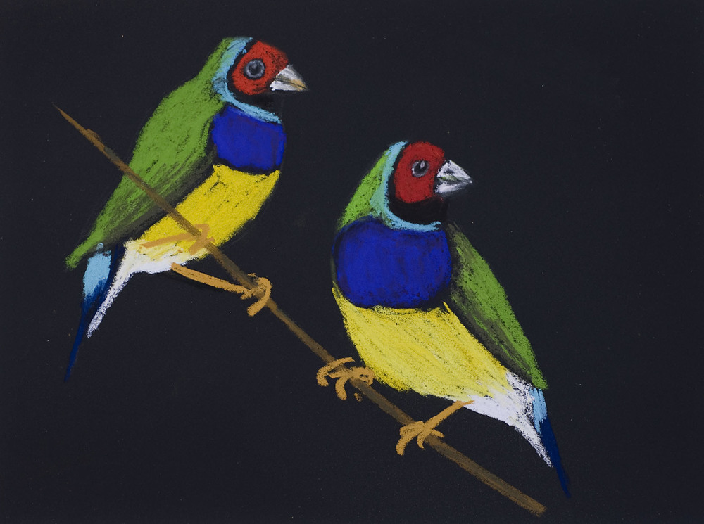 PG_Gouldian_Finch_Greenhill_Exhibition_2007.jpg