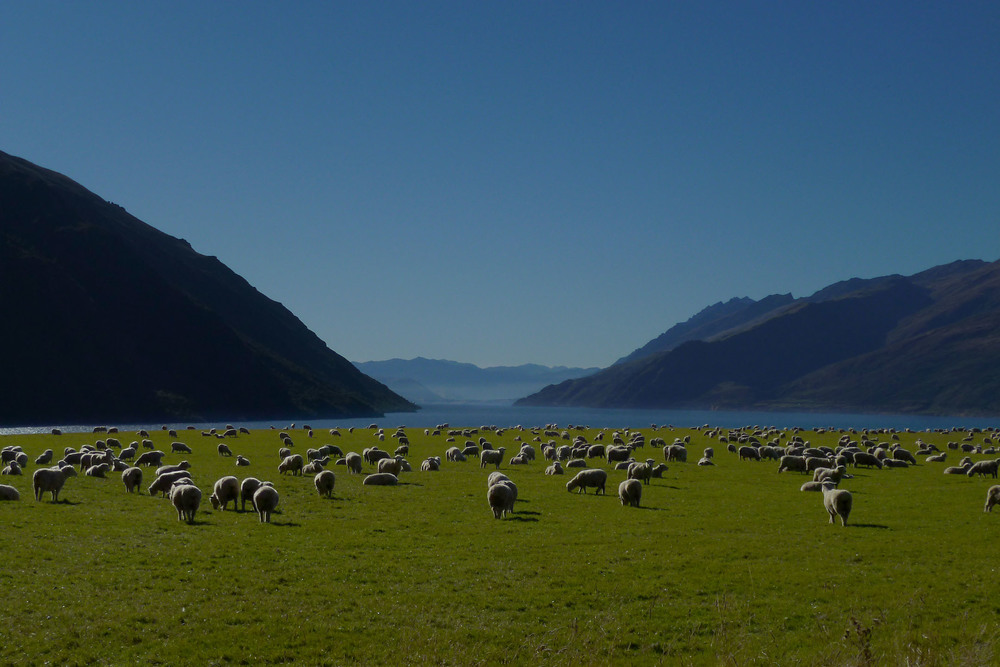 south_end_Lake_Wakatipu_20110430_Queenstown_NZ.jpg