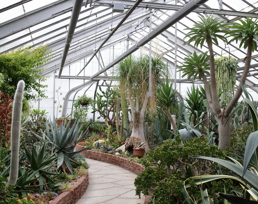 Arid garden - cacti and succulents galore!