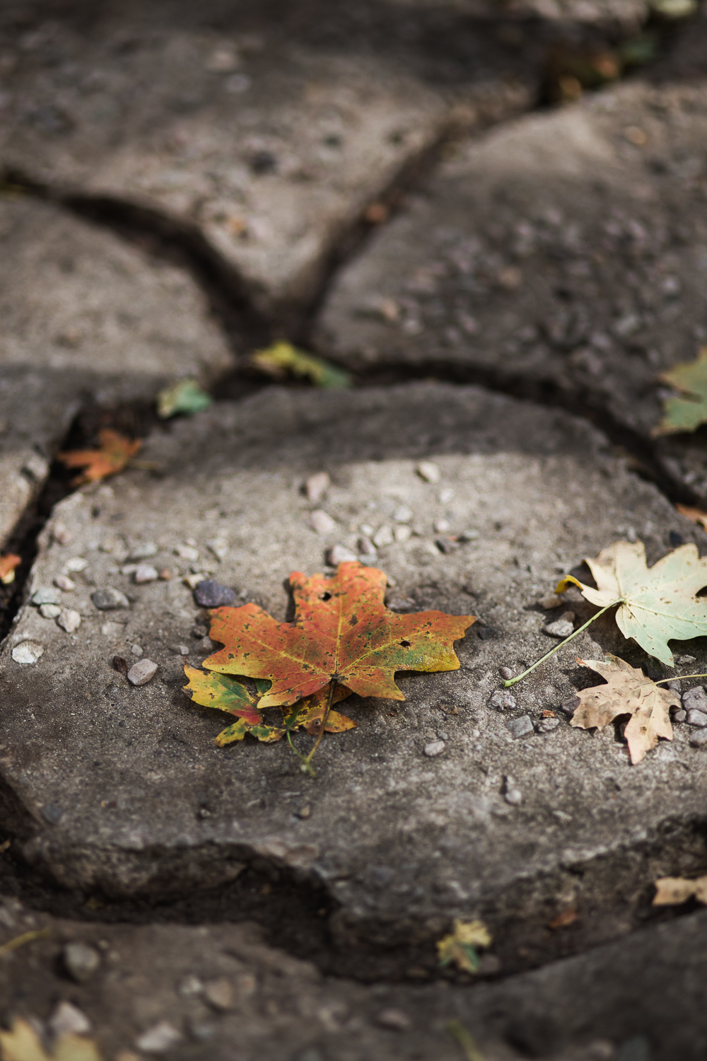 Fall colors leaves cobblestone detail wedding