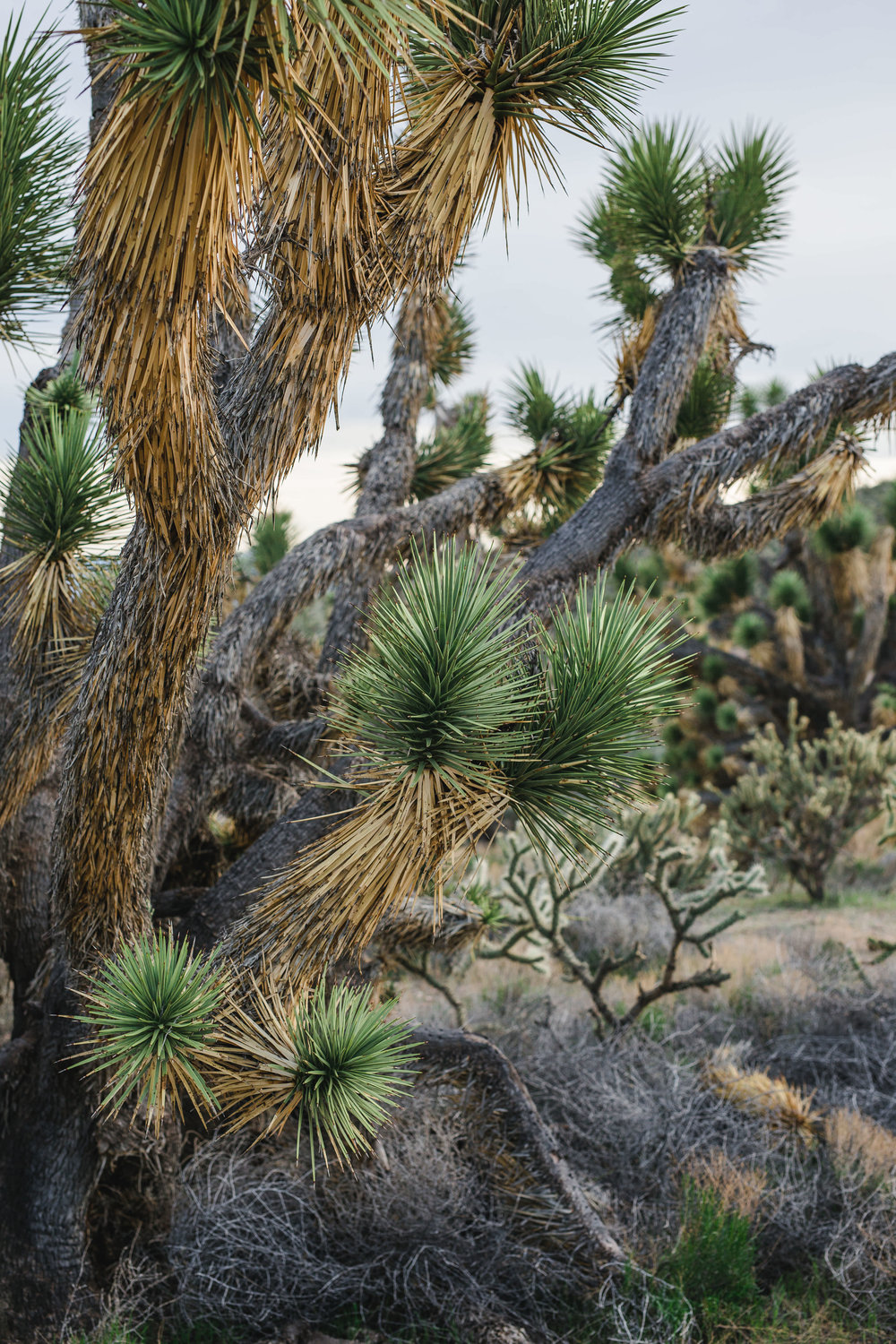 Joshua tree cactus details Utah Desert Kyle Loves Tori Photography
