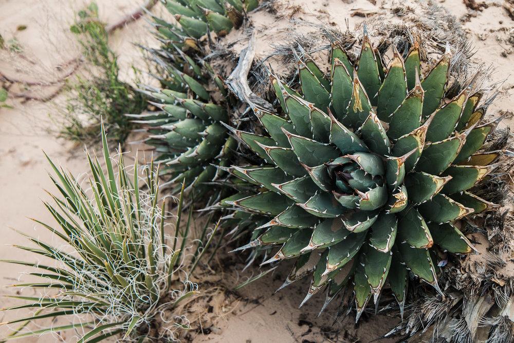 Desert plant detail Snow Canyon State Park Southern Utah