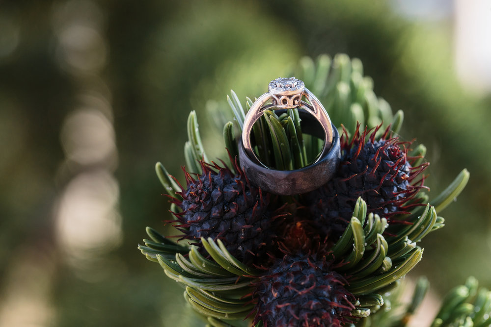 Bride Groom Rings Pinecone Mountains