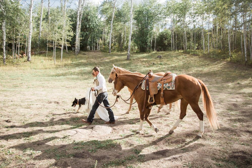 Horses Bride Groom Ceremony